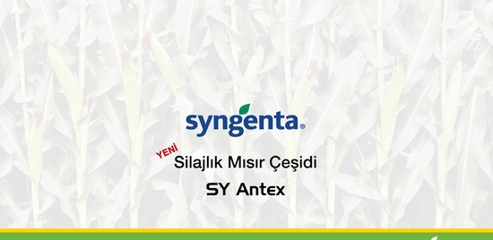 sy-antex-banner-video.jpg